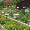 NH Exterior Farm Honey Bees