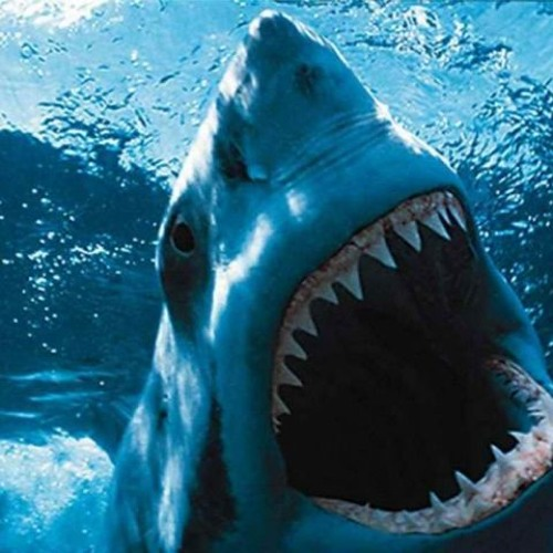 Jaws (ate Low bar's Bassline) - Tomba