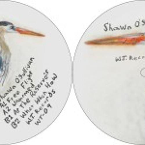 "Shawn O'Sullivan ""Free Flight"""