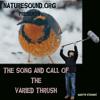 20120119T04-varied thrush