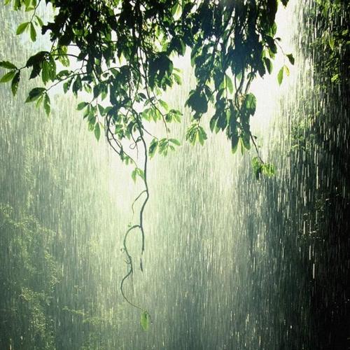 Dark Ambient Forest - Forest Rain