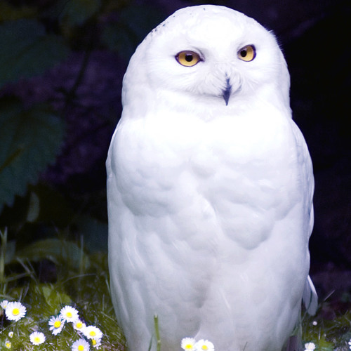 ▓ Hedwig's Theme│Improvised Acoustic ▓