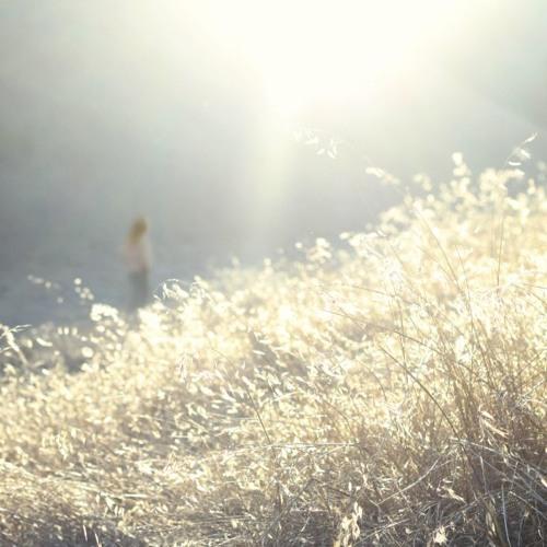 Birds of Passage - Bullrush in the Sun