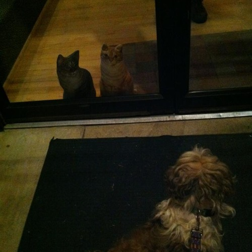 Barefoot Nellie-Jimmy-CAT JAM