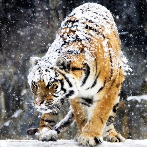 Snow on me please
