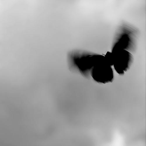 LAMB - Butterfly Effect (Adriæn remix)