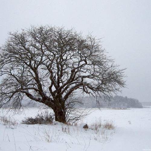 Synapsys-Deep Winter MiniMix