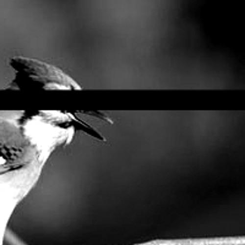 Les oiseaux se cachent pour mourir