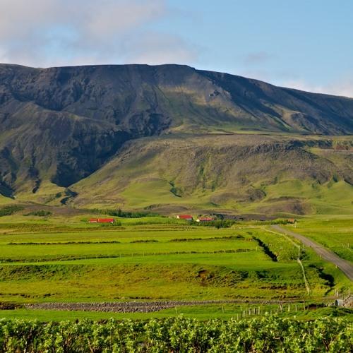 Iceland - atmos mountain plateau, farmland, birds, distant livestock and fields