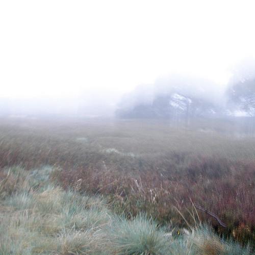Utah Mist