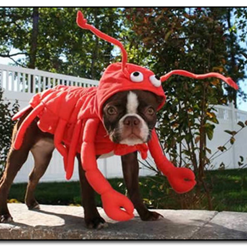 Lobstertail Riddim