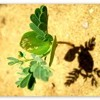 Sand Plant