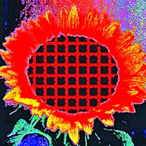 Supersonic Sunflowers