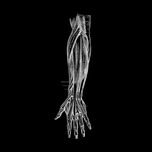 Borealis - Womb (Aebeloe's 'Glisten' Mix)