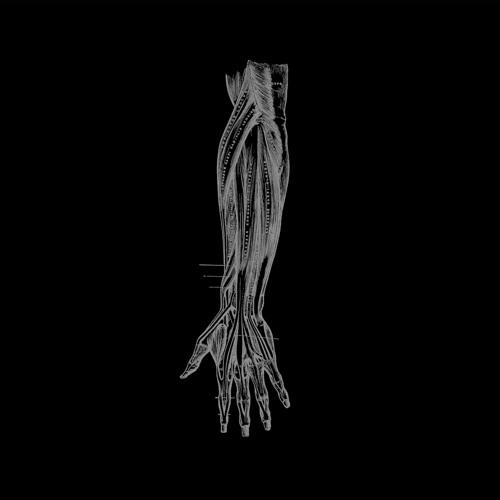 Borealis - You Were Away (Dual Shaman 'Pyrexia' Mix)