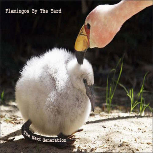 Flamingos By The Yard - The Next Generation
