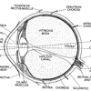 Human Eye/Human Mind