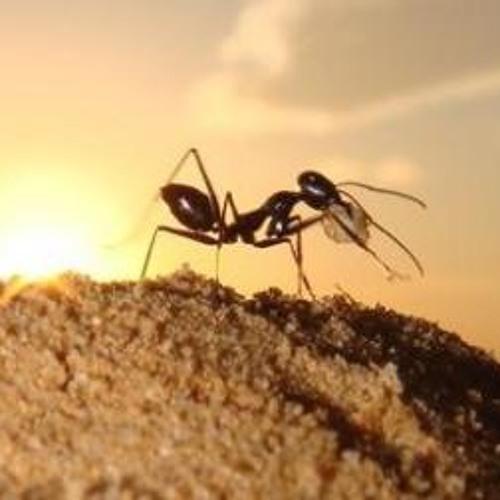José Noventa & KooDoo - The empire of the desert ants