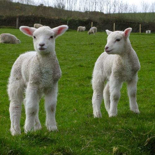 Lamb: Butterfly Effect - Elvis Whistlehoof's Gothik Funk Splendidariem