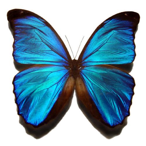 Bassit - Butterfly S