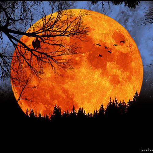 Harvest Moon by Nolyn Falcon