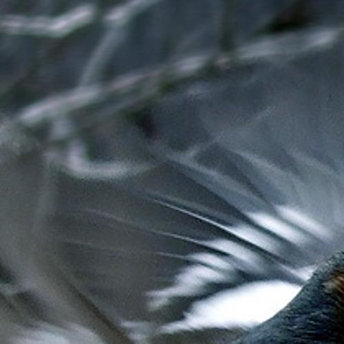 Ef Imino Nertz [disquiet0009-avian]