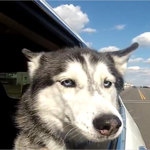 Cruising Canine Mishka