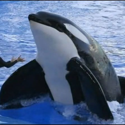 """911 call from SeaWorld: """"A Whale Has Eaten One of the Trainers"""""""