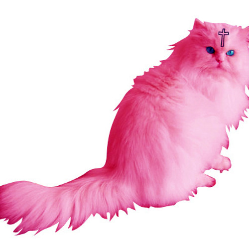 CAT/MUSIC/PINK/BITCHES