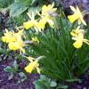 Våren er håpets sang(spring is the song of hope)RaphaelGTR-Oddrun Eikli