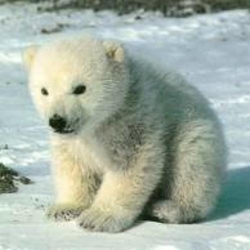 Tears for Bears