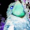 Common Potoo (7 calls) Full Moon mp3