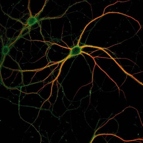 Synapse [CLIP]