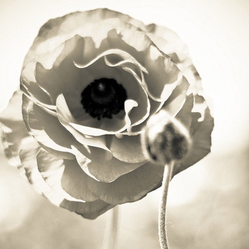 Siavash Ghanbari - Smells Like Flowers (Talal & Zoi mastering) - Takita Records