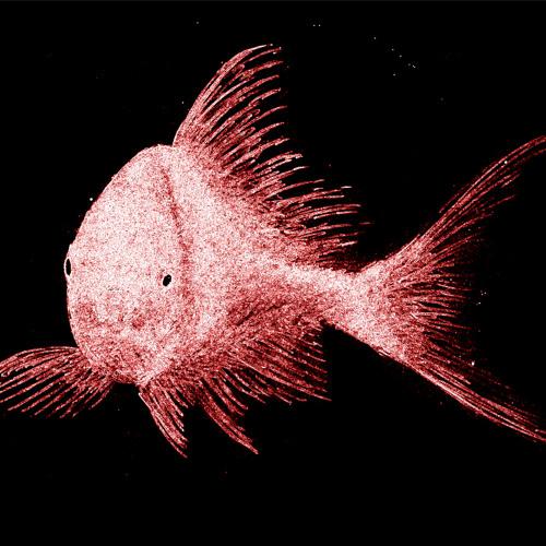 exploring catatafish