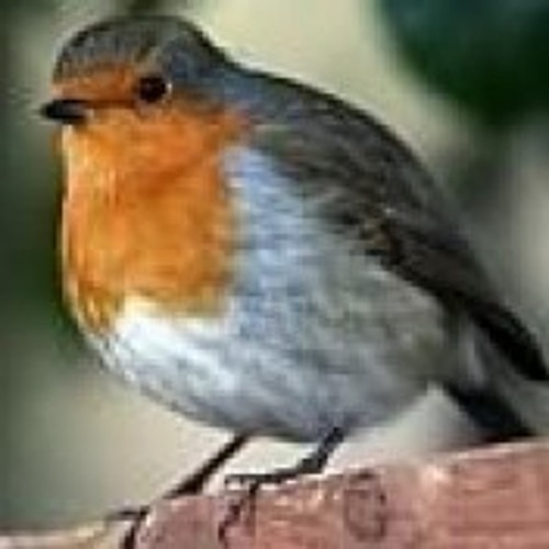 The Original Radio Birdsong  [7minute extract +wm]