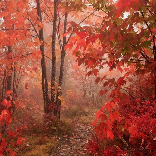 Autumn forest (2)