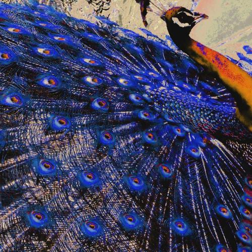 [proc419]-01-Consistency Nature - Tango Peacock