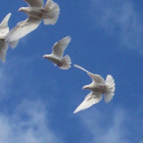 Dirty Vegas - Little White Doves (Kayus remix)