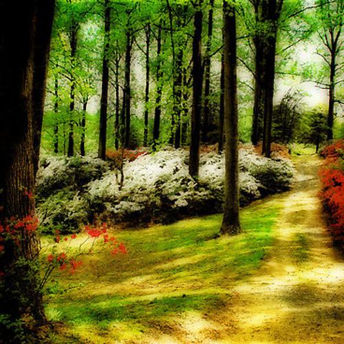 PHAZE - Springtime