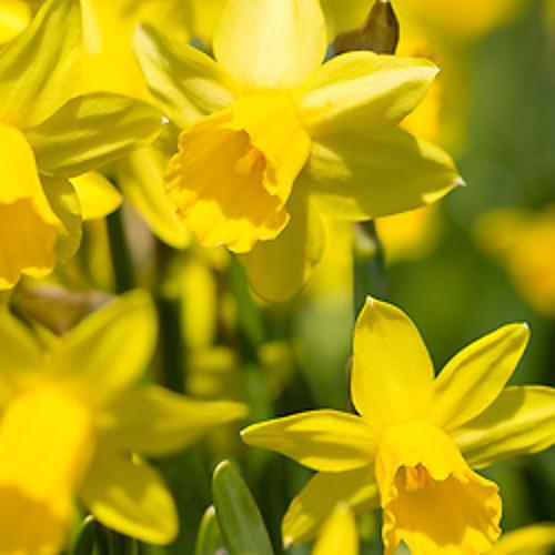 Le printemps : jardinage et cuisine - by Schmitt