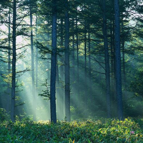 Ateck - Magic Forest (Original)