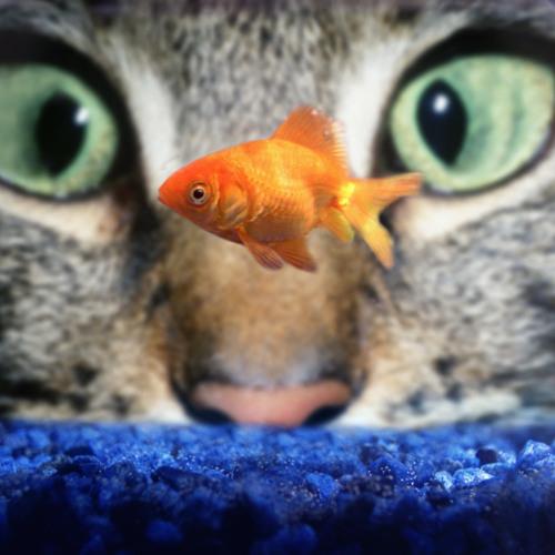 Robots didn't eat my goldfish (baddest kitty mix)