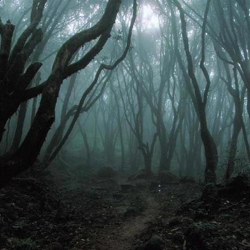 Escape through the Forest