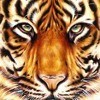 EYE OF A TIGER(520 Degreez)                leviticus