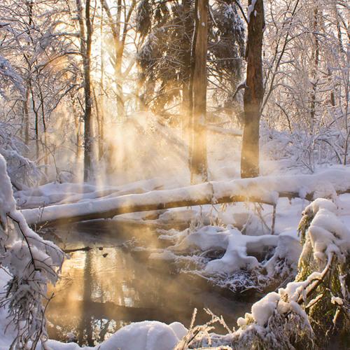 07 - Soleil d'hiver