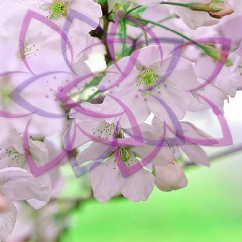 LeafyGreen @ Sakura 3.24.2012