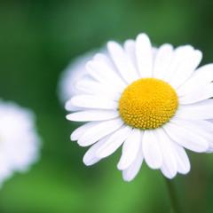 'Awaan El-Ward'...'Blooming Season'