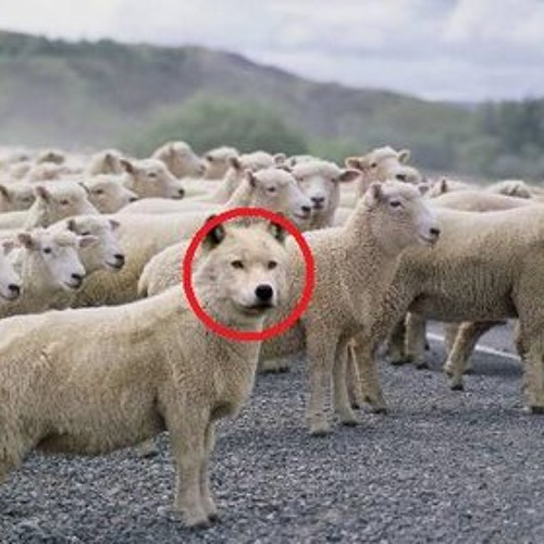 The Wolf inside The Herd