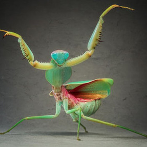 mr. christie - Love Bug